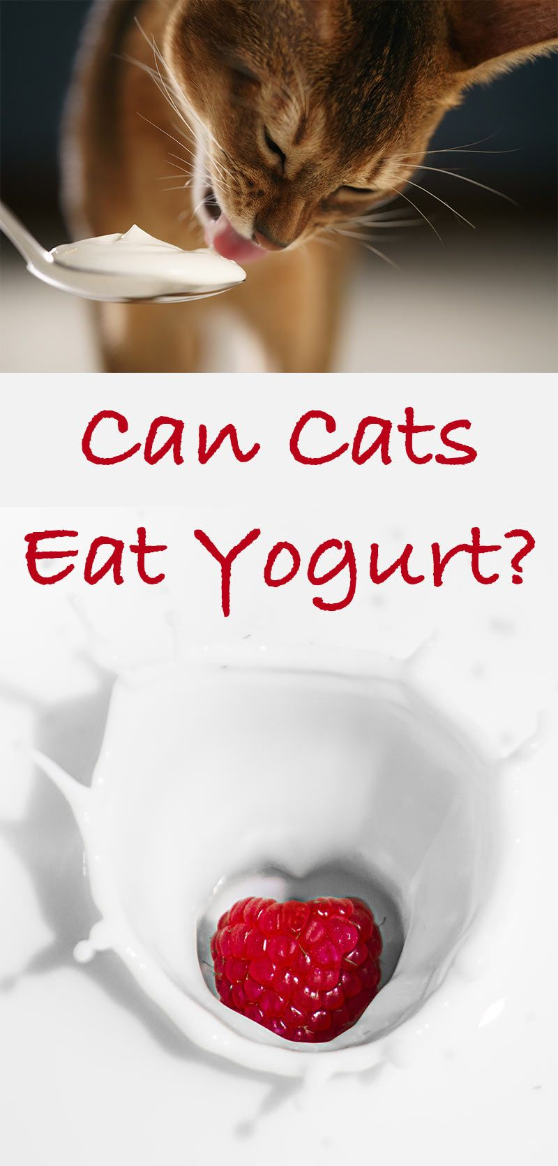 Can Cats Eat Yogurt? A Cat Food Safety Guide From Cat