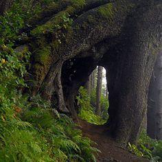 Oregon Coast Hikes | Oregon Hiking Tours