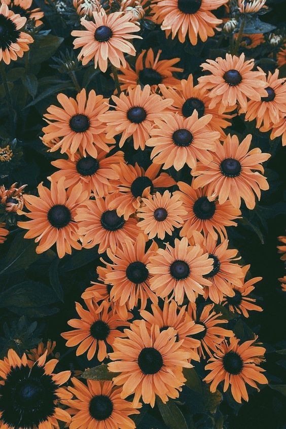 50+ Beautiful Flower Wallpapers For iPhone (Free Download!)