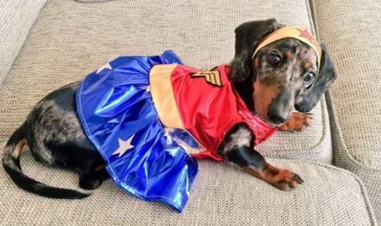 Cute Costumes For Sausage Dogs Dachshund Central Sausage Dog