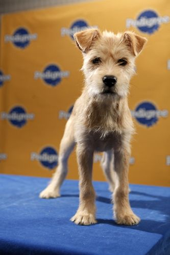 Puppy Bowl 2011 Puppies Cute Dogs Dog Love