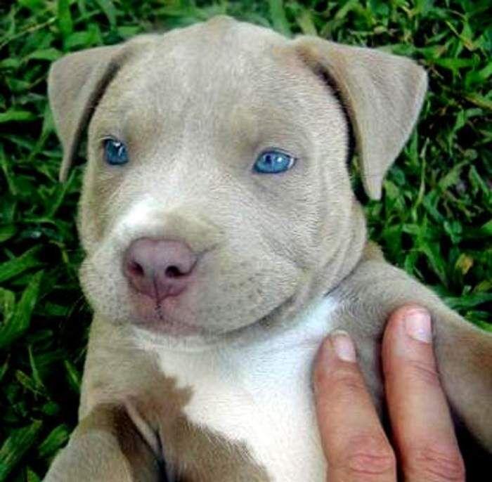 resultado de imagen para razas de perros medianos de pelo