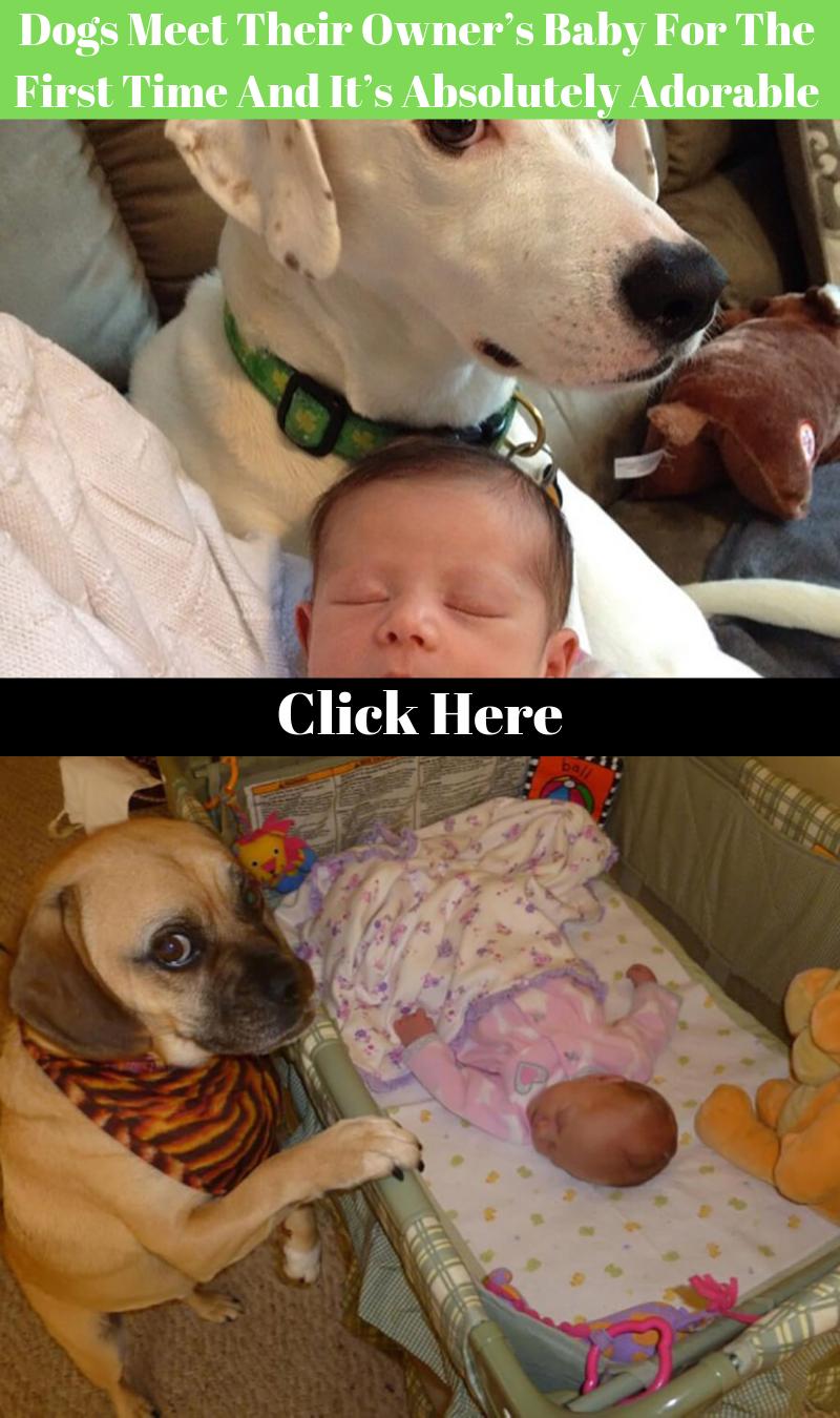 Pets Craigslist New York