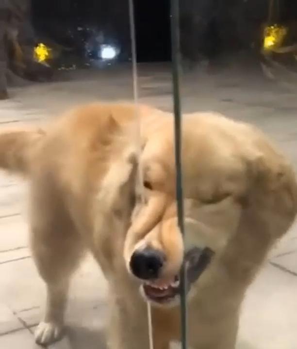 Please, open the door