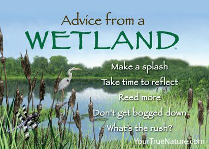 Advice from a Wetland Magnet | True nature, Advice, Nature