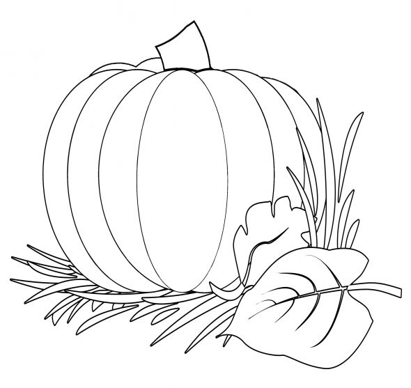 Pumpkin Harvest Coloring Image