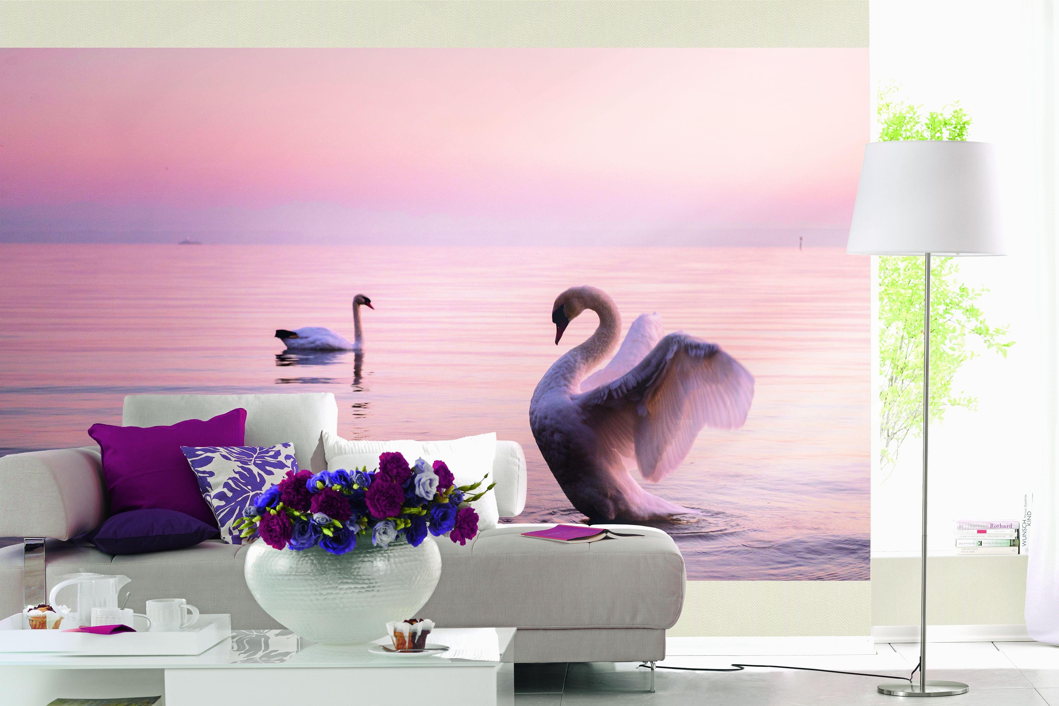 Traumhaftes Raumbild mit Schwan am Bodensee. Perfekte Fototapete für ...