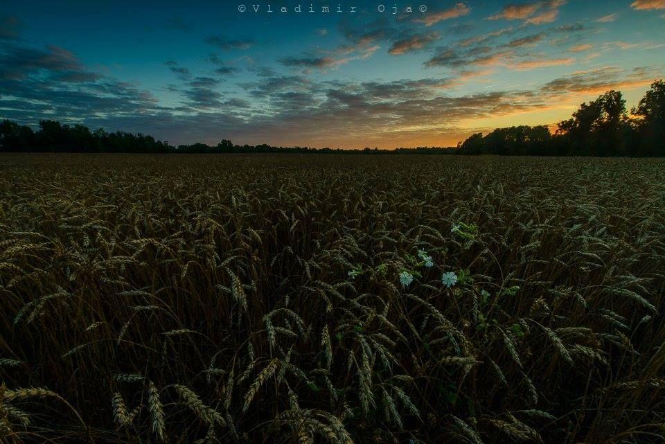 Eestimaa taevas