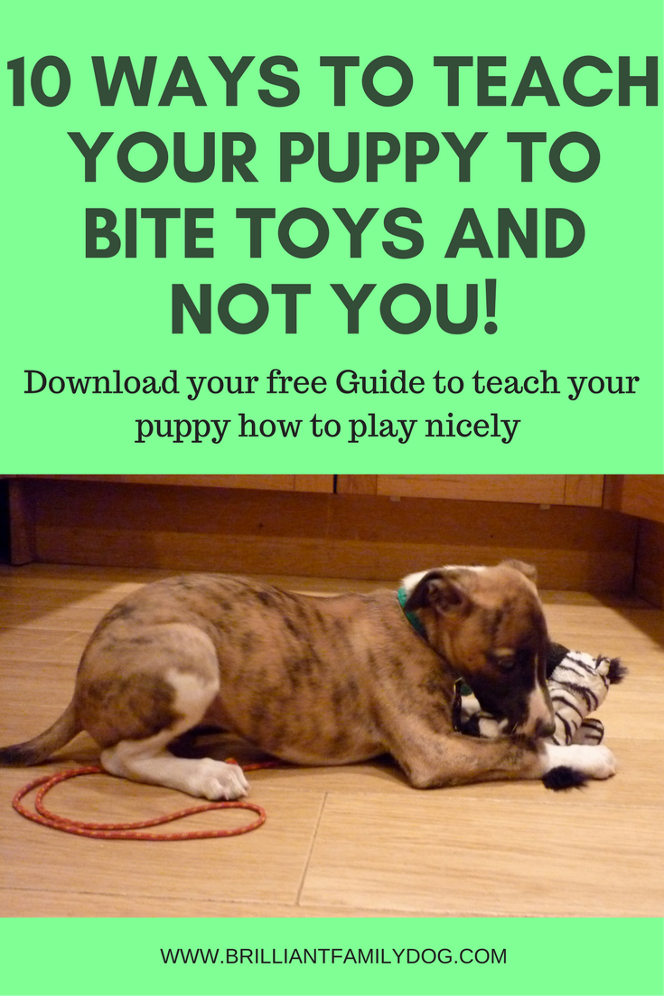 10 Ways To Stop Puppy Biting Brilliant Family Dog Stop Puppy From Biting Puppy Training Biting Puppy Biting