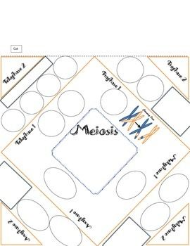 Mitosis and meiosis foldable bundle students mitosis and meiosis foldable bundle ccuart Gallery