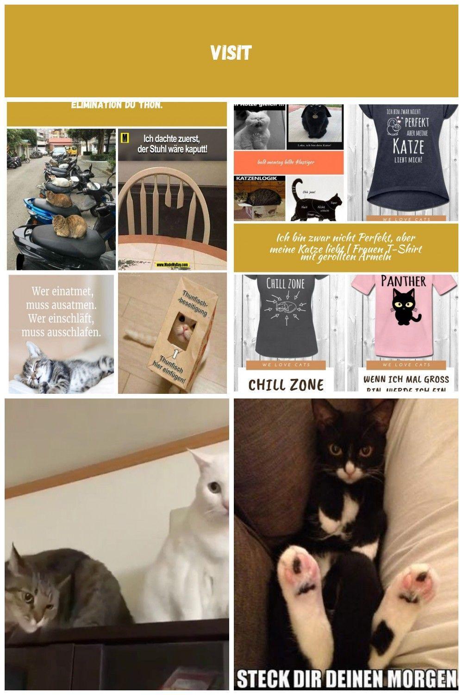 20 Lustige Momente Mit Katzen Katzen Lustig Katzen Lustig