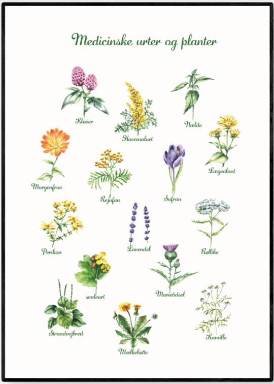 Plakater Med Natur Plakat Butik Kob Plakaterne Her Botanik Planter Sorte Blomster