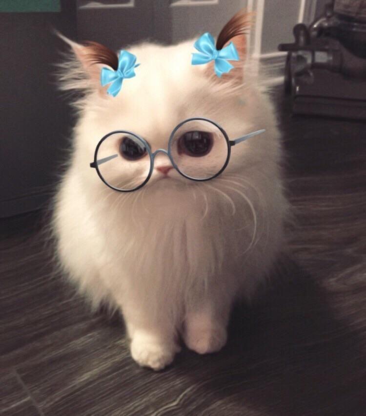 New Post On Awwww Cute Lustige Tierfotos Susseste Haustiere Niedliche Babykatzen