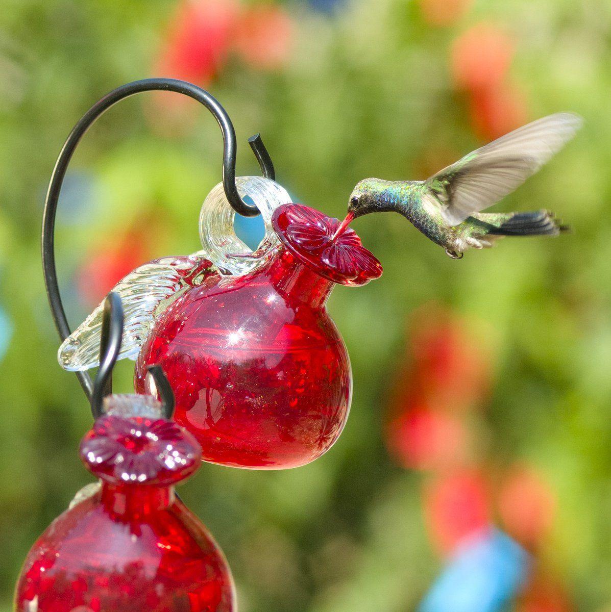 Pixie Hanging Glass Hummingbird Feeder Glass hummingbird