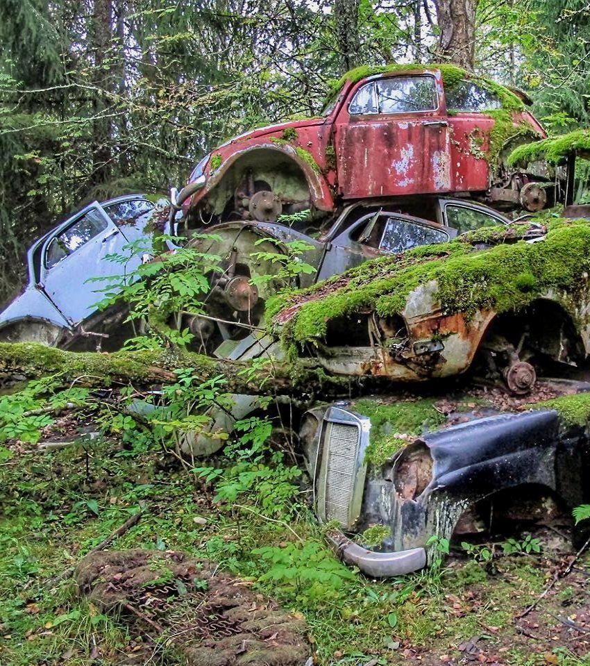 Hundreds Of Abandoned Old Cars In The Forest Bastad Sweden By