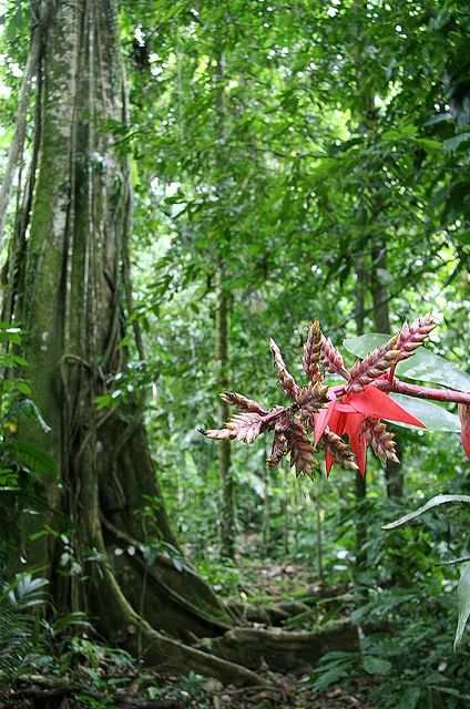 The Amazon Rainforest Covers 1 7 Billion Acres It Is Located