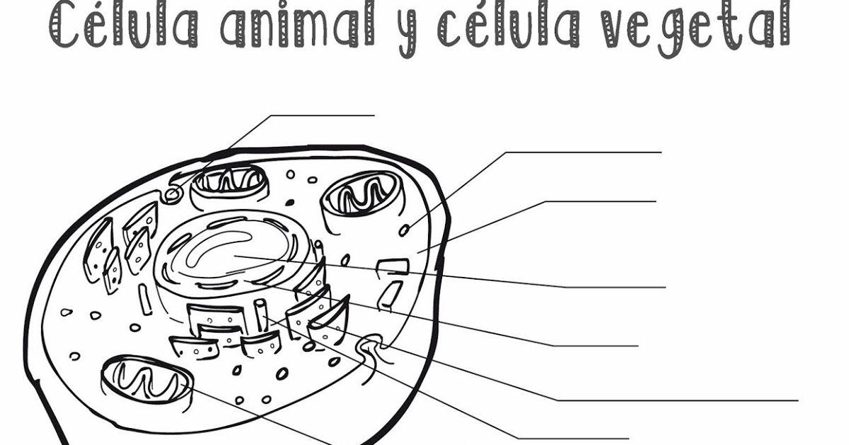 Resultado De Imagen Para Celula Animal Y Vegetal Para Colorear