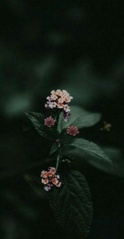 Flowers black background photography bouquets 55 ideas