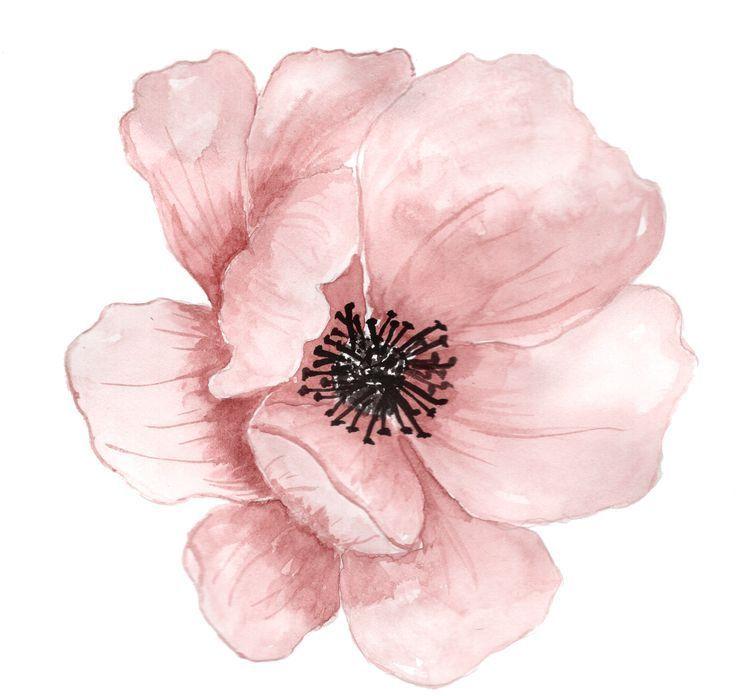 blumen aquarell malerei clipart  rosa hand …   aquarell