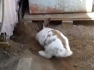 Rabbit Saves Trapped Kitten Https Ift Tt 2m9nj1c