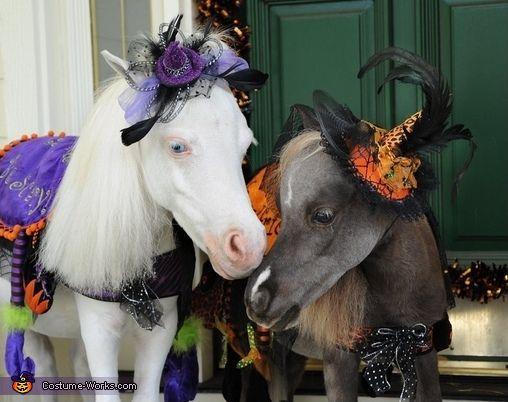 Miniature Horse Medieval Charger   Horse costumes, Horses ...   Mini Horse Costume