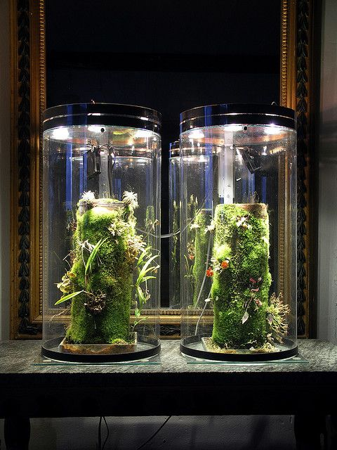 nanovivs with cover container gardening pinterest terrarium pflanzen und orchideen. Black Bedroom Furniture Sets. Home Design Ideas