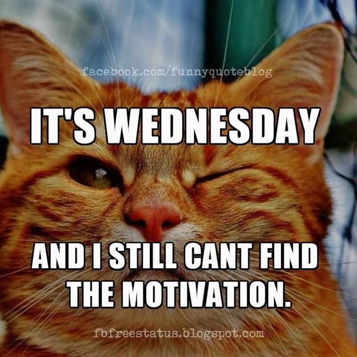 Wednesday Memes 45 in 2020 | Funny wednesday memes, Happy ...