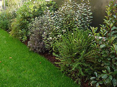 Plantes pour haie vive jardin pinterest gardens for Buis pour haie