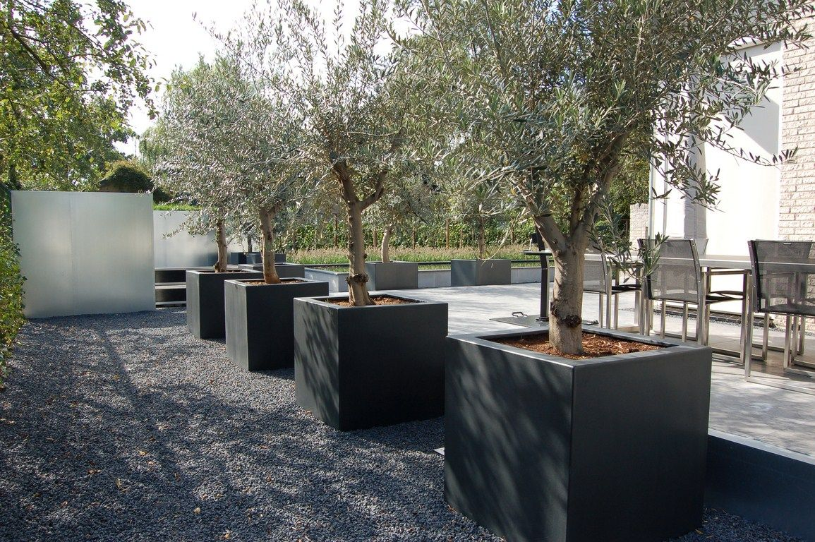 Tuinen buiten love these massive planters with olive trees in