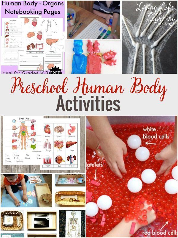 Preschool Human Body Activities Homeschool Pinterest Human