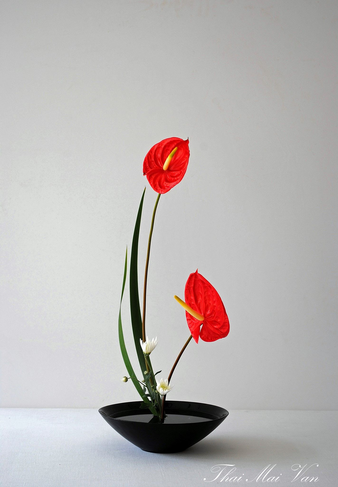 Anthurium Flower Arrangements Simple Creative Flower Arrangements Ikebana Flower Arrangement