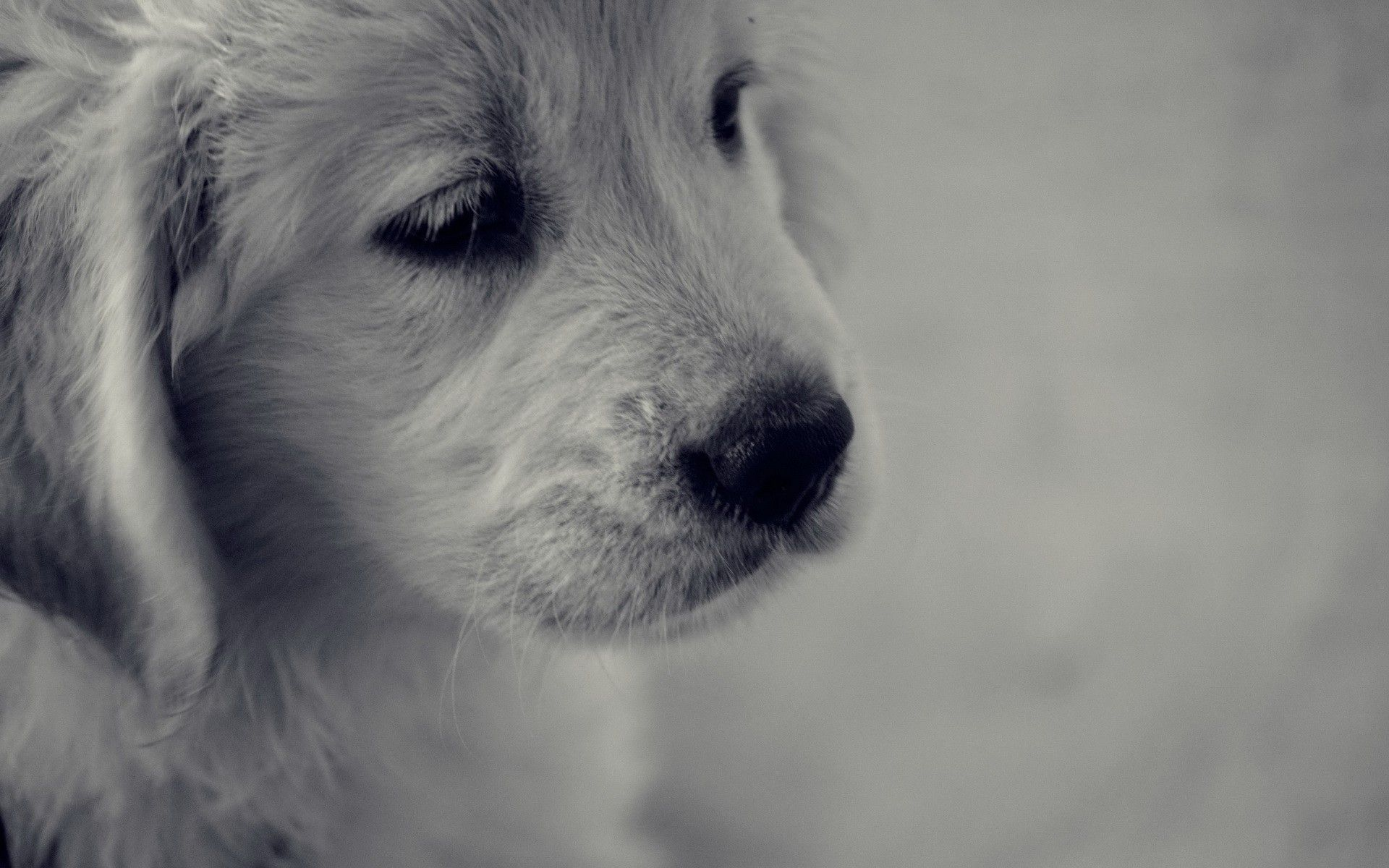 Best Sad Black Adorable Dog - 7eafe145498037a5af679198c36a781b  Gallery_711567  .jpg