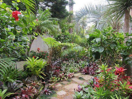 Heliconia La Planta Preferida En Jardines Tropicales Y: Recopilación De Jardines Tropicales Tan Bellos Que