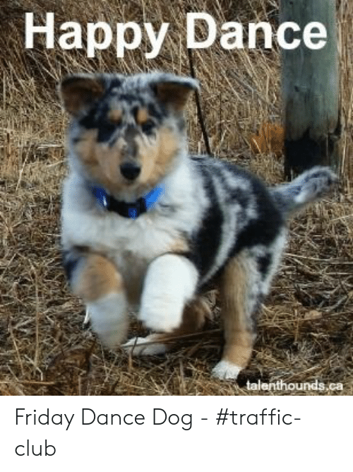 Happy Dance Dog Meme Happy Dance Meme Funny Dog Memes Funny Dog Videos