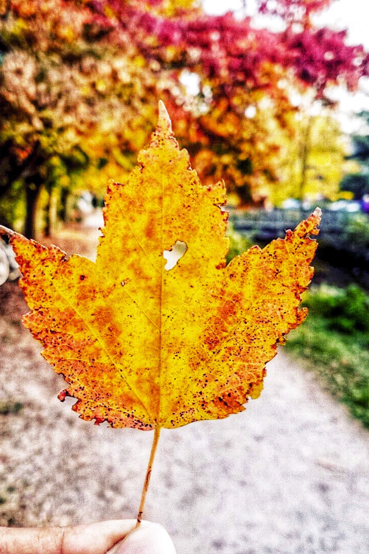 0ae3b1d67d4178 It's almost fall! Summer was amazing but nothing fall means that Christmas  is right around the corner and I can't wait! #fall #nature #leaves  #photography # ...