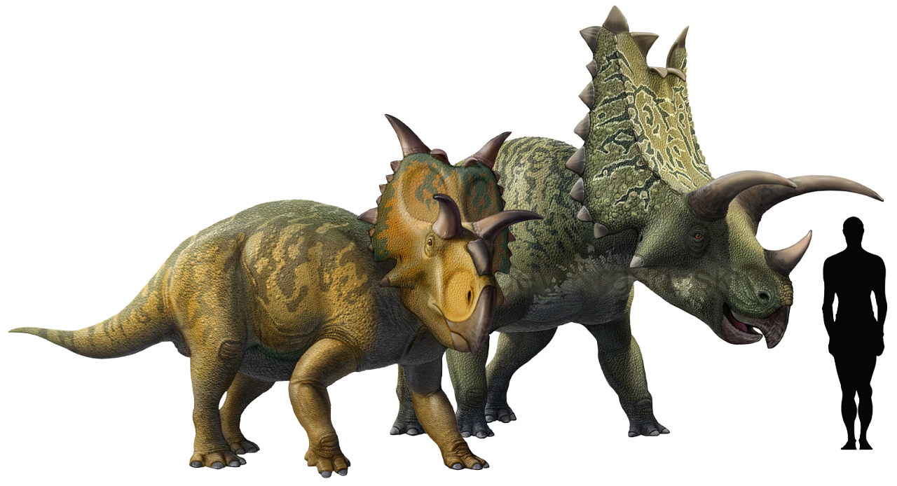 Xenoceratops foremostensis and Pentaceratops sternbergii ...
