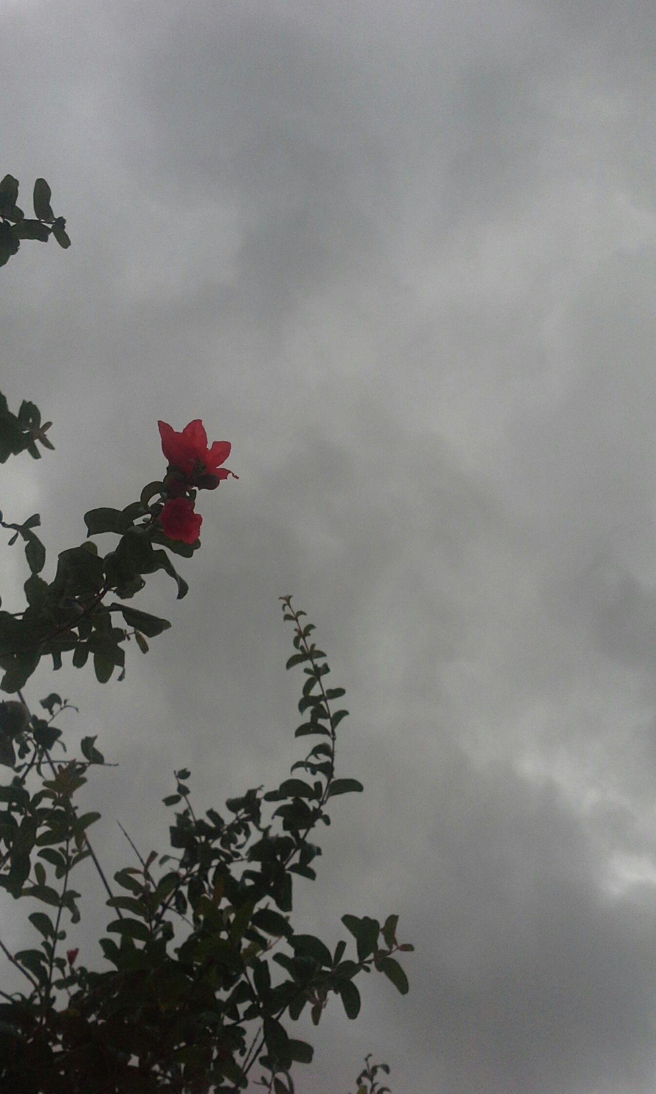 Céu nublado | Fotografia da natureza, Fotografia de paisagem ...