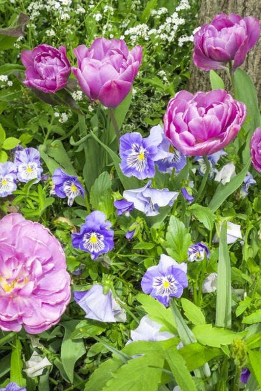 Que planter avec des tulipes ? en 2020 (avec images