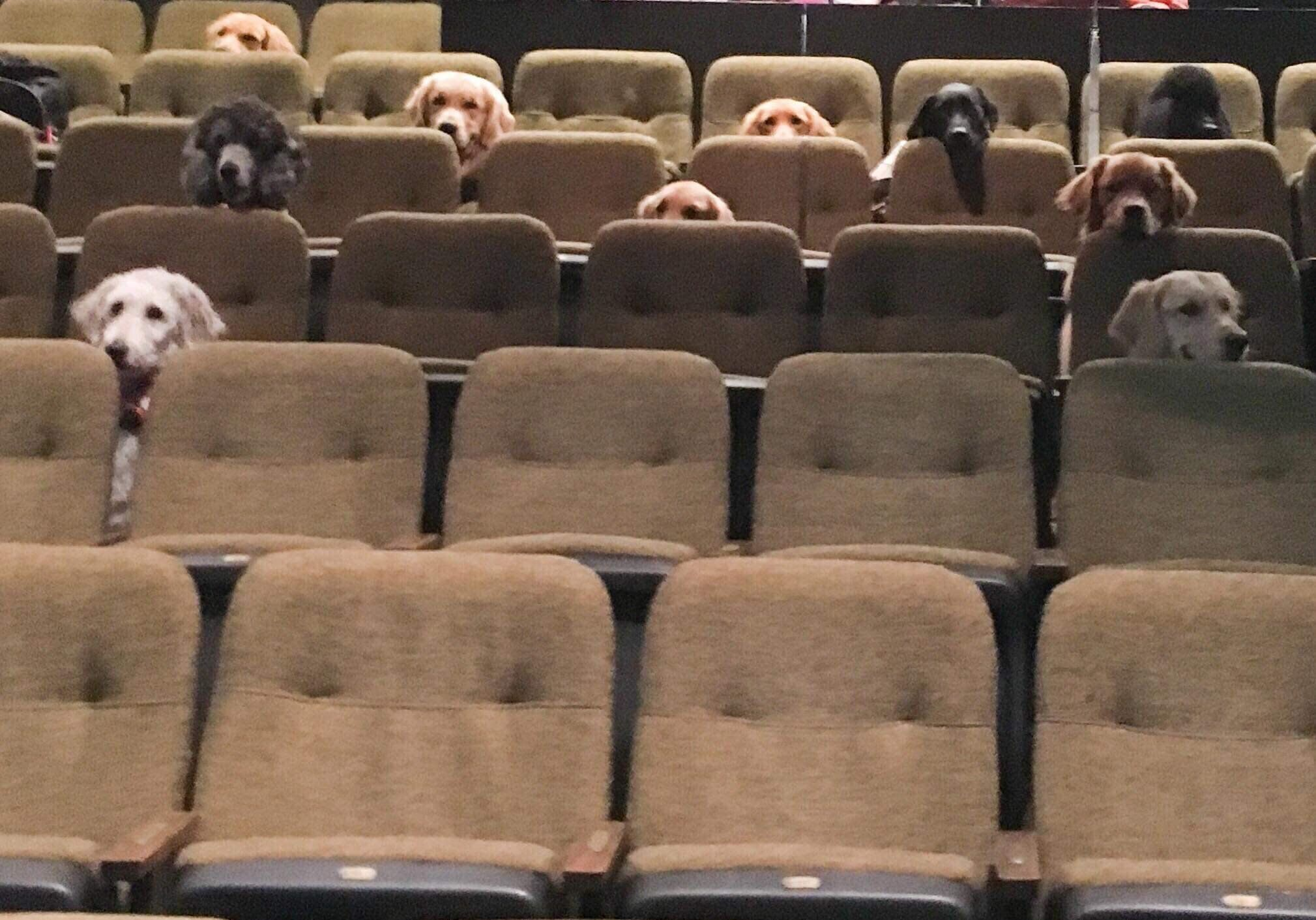 Very Good Service Dogs Watch Billy Elliot The Musical At The