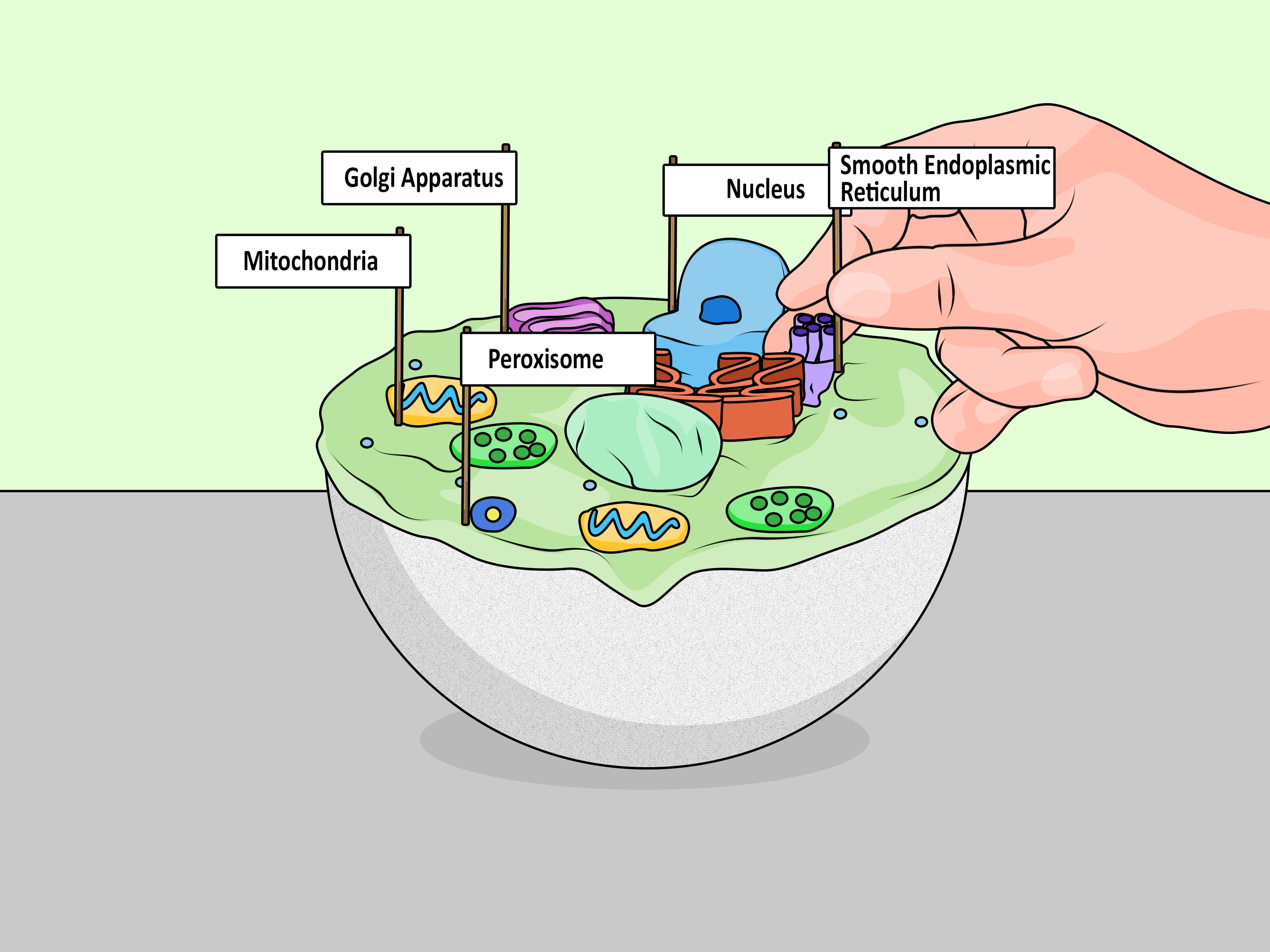 Make a Model Cell   Cells project, Animal cells model ...