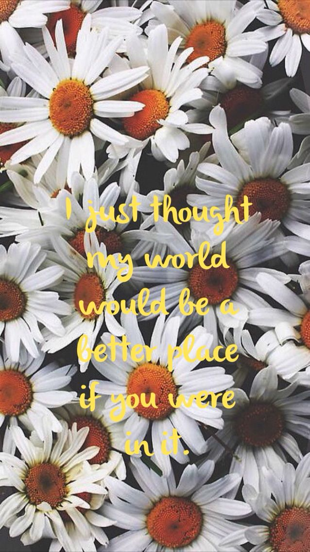 Ned Pushing Daisies Quote Quotes Wallpaper Flowers Tumblr