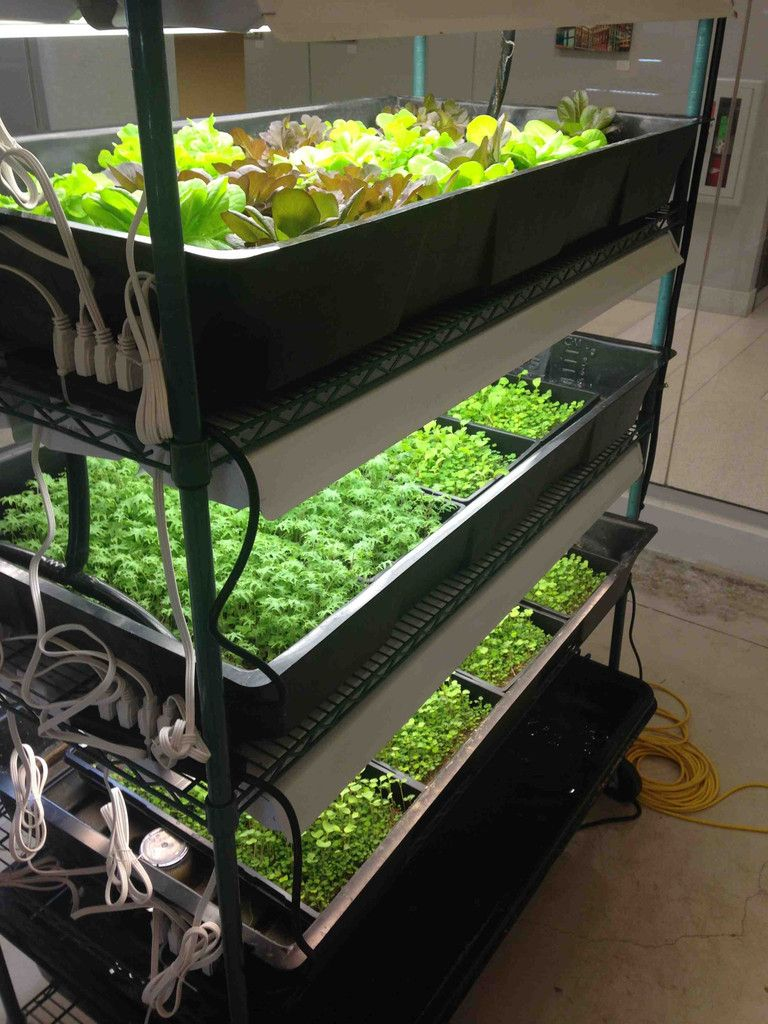 Diy Home Farming Kit Aquapnics, Organic hydroponics