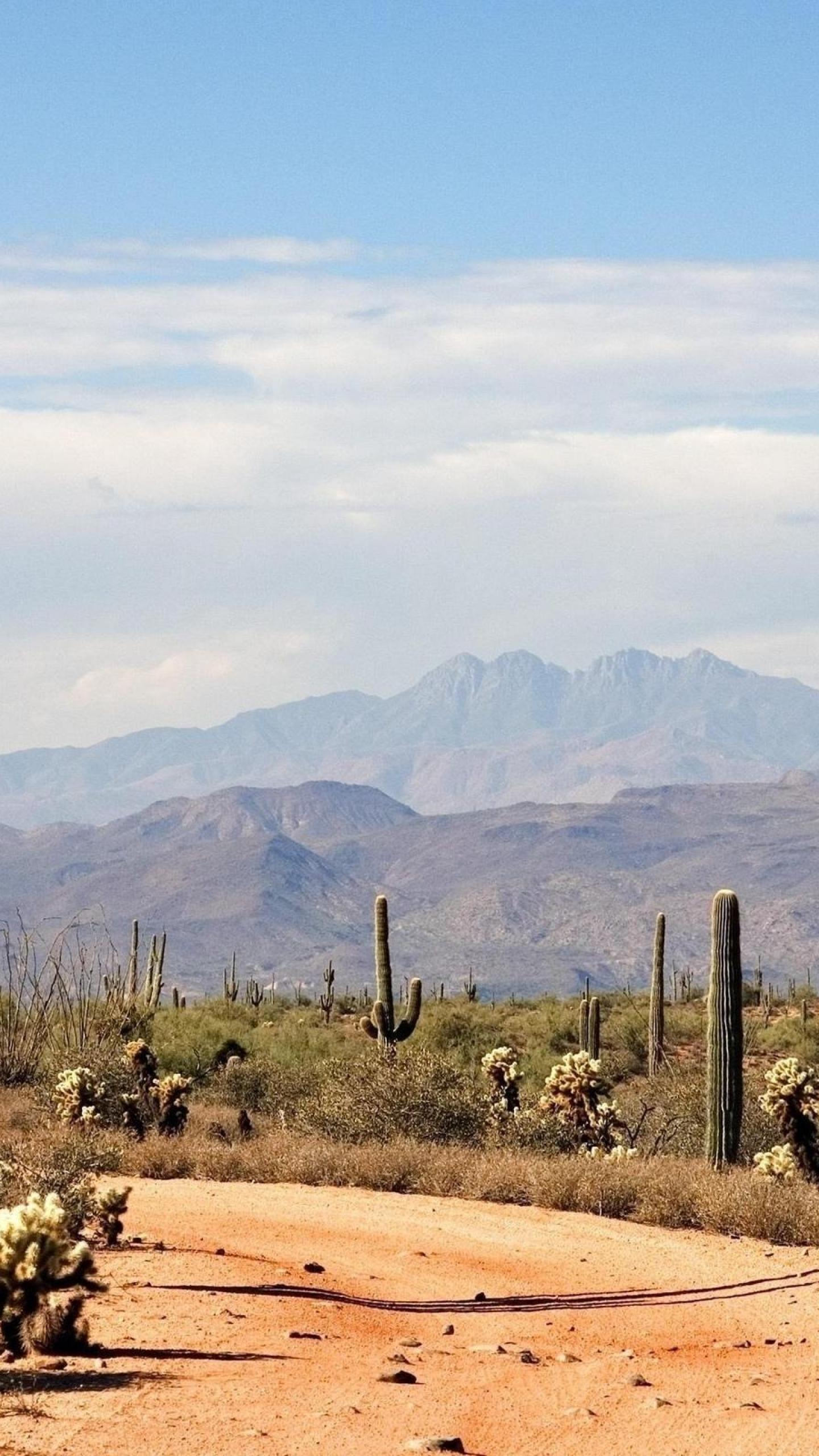 1440x2560 Summer Sky Nature Desert Cactus HD Wallpapers