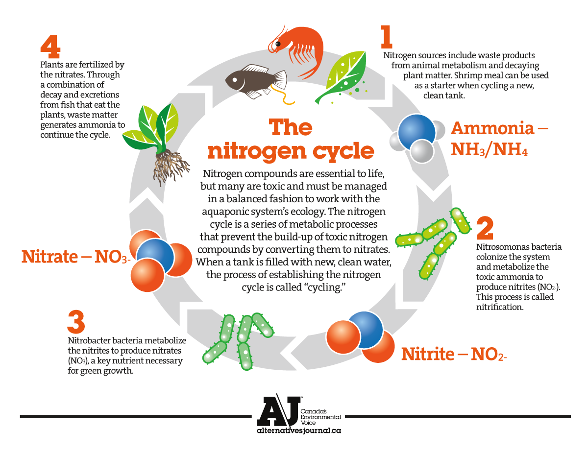 Nitrogen_Cycle_www.alternativesjournal.ca