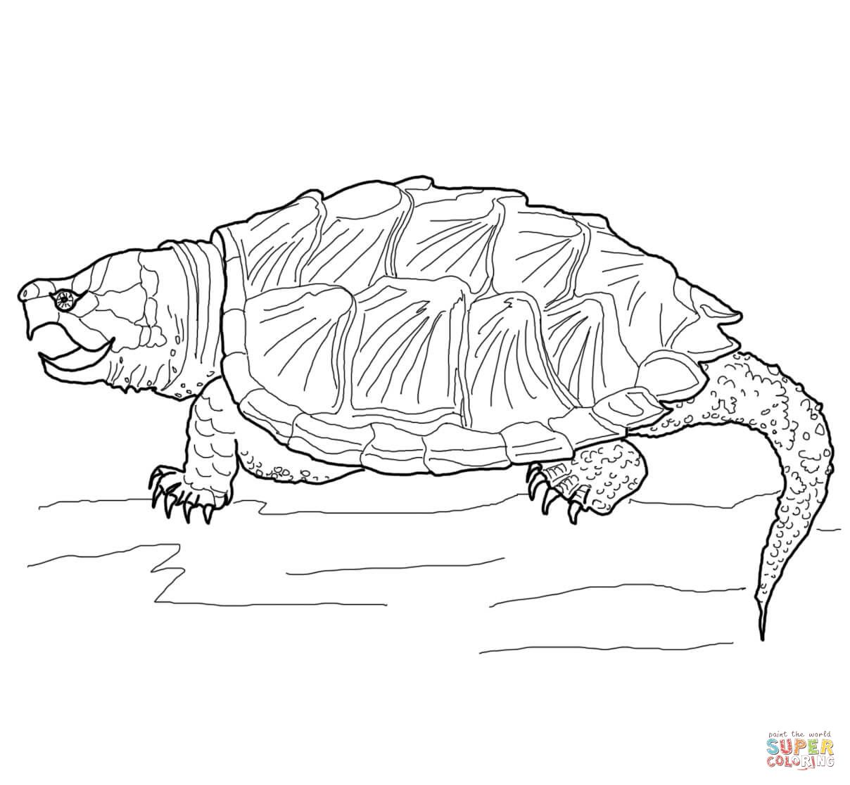 Realistic Turtle Coloring Pages Google Search Turtle Coloring