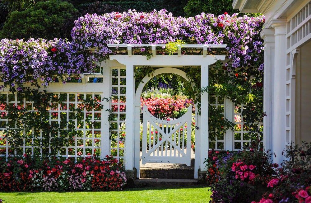 Dies Ist Eine Große Blumen Garten Tor Idee. Bunte Rebe Blüten Und Blumen  Sträucher