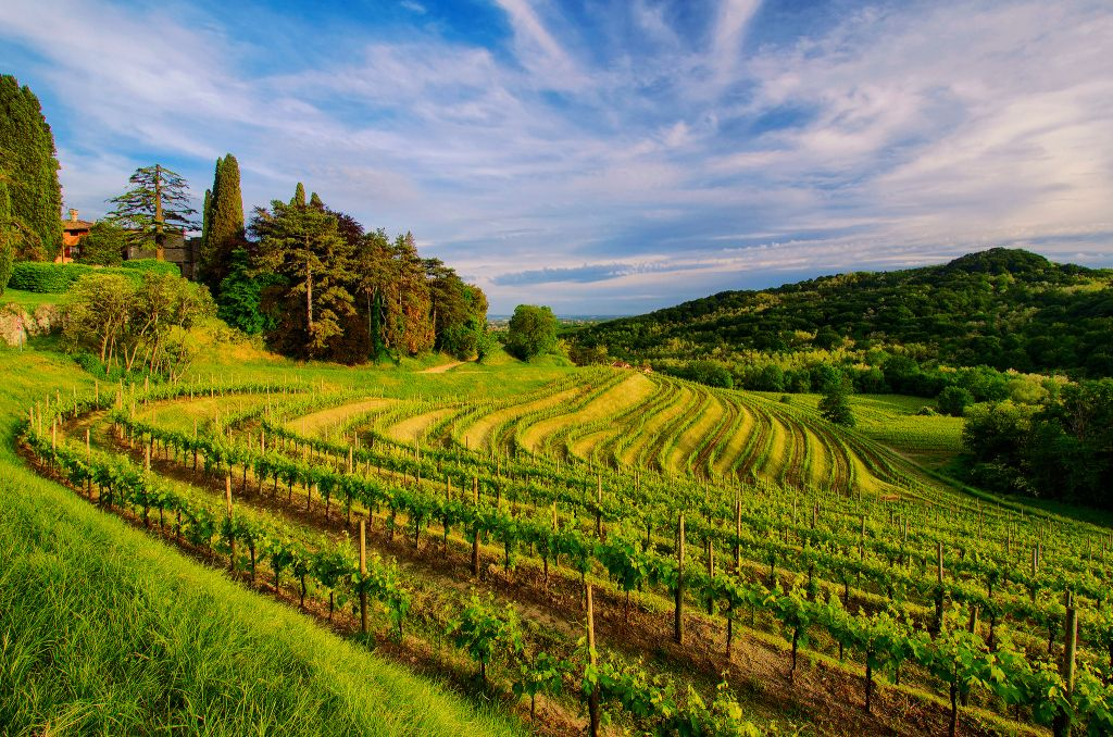 Vineyard Background Hd Images Wallpaperzall Vineyard Background Widescreen Wallpaper