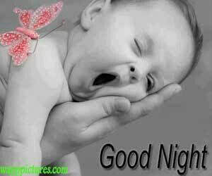 Good Night Cute Good Night Good Night Baby Good Night Image
