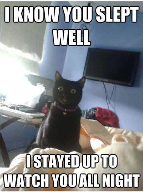 Image result for cat staring at me while i sleep