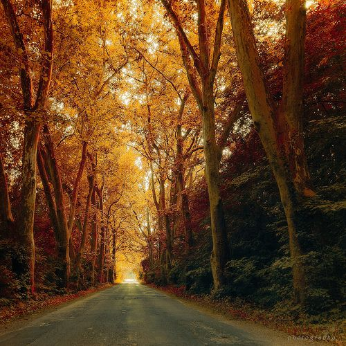 Fall Country Road...The Way Out